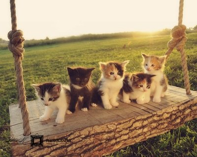 Cute Adorable Kitten Family On A Swing