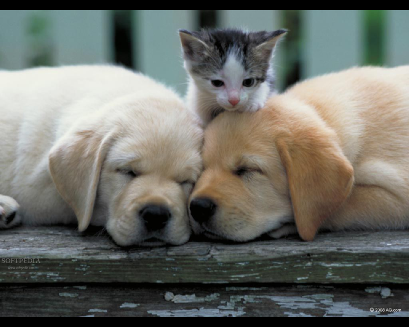 Cute Adorable Kitten And Sleeping Puppies