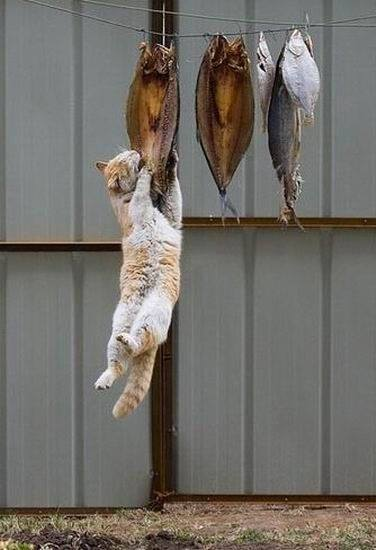 funny-hungry-cat